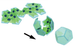 cell origami
