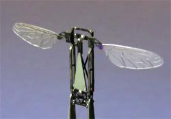 monolithic bee